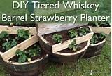 whiskey barrels