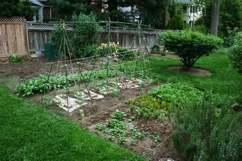 Vegetable Gardening Tips: Starting Backyard Vegetable Gardening In ...