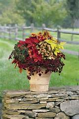 Fall Plants for window planters around the porch