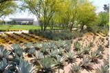 about plants succulent garden cactus garden landscaping garden