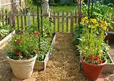 ... Container Gardening > Perennial Flowers For Container Gardening Ideas