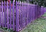 purple fence in the garden garden design