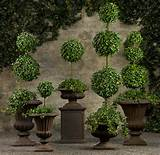 english ivy topiaries traditional plants by restoration hardware
