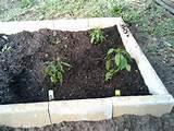 Best Soil For Gardening