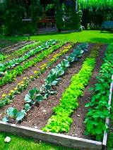 Vegetable Garden Tips in CT | Spring Vegetable Gardening | Winterberry ...