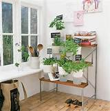 indoor garden idea apartment gardens pinterest