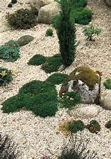 creating a scree garden rocks stone and gravel in the garden