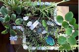 Gardening This Winter with Indoor Miniature Gardens | The Mini Garden ...