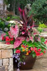 great plants for shaded areas container gardening pinterest