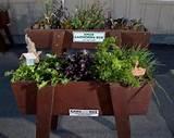 knox garden box ideas for our patio garden pinterest