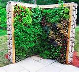 amazing vertical salad garden ideas an edible wall of greens