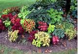 ... Gardens Ideas, Garden Ideas, Shades Gardens Plants, Garden Design