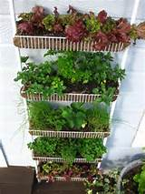 Vertical Gardener: Inspiration Wednesday: Vertical Vegetable Gardens