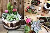 How to make simple cute indoor cactus garden step by step DIY tutorial ...