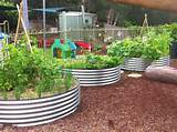 tc jpg 1 600 1 196 pixels ideas for school garden pinterest