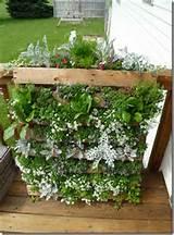 DIY Vertical Pallet Garden | Wooden Pallet Furniture
