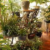 best plants for urban apartments
