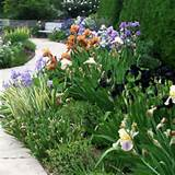 have always wanted an iris garden garden ideas pinterest