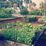 Busselton community garden | WRIII park ideas | Pinterest