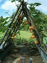Great idea for growing pumpkins | Gardening Vegetable & fruit | Pint ...