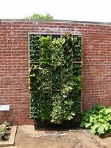 dream vertical obsessed with growing a vertical kitchen garden
