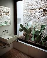17 Indoor Cactus Gardens | Home Design And Interior