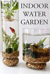 indoor water garden inspirations | Indoor Water Garden, Water Garden ...