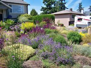 contemporary west coast drought tolerant garden with hidcote