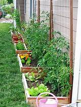 ... Gardens Ideas, Container Gardens, Garden Ideas, Raised Gardens, Raised