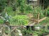 garden | Funky garden ideas | Pinterest