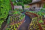 container herb garden ideas herbs container garden cfs0254 container ...