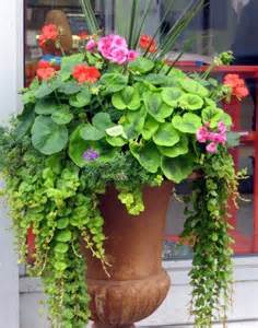 container gardening container gardening designs pictures ideas
