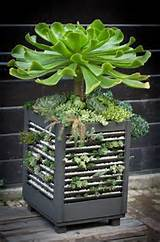 and easy to achieve..... Gardens Ideas, Old Shutters, Container Garden ...