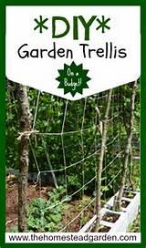 diy garden trellis idea on a budget