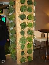 herb ideas garden wonder pinterest