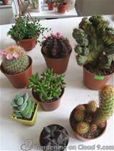 ideas of cactus garden are
