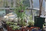 spring in the greenhouse garden ideas pinterest
