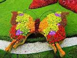 garden butterfly garden designs pinterest