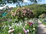 Rose Garden Ideas Pictures | Native Garden Design