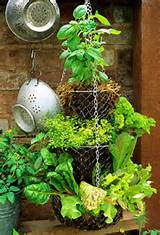 diy herb garden--turn a hanging fruit basket into an herb garden from ...