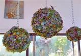 Succulent Orb Forms - Outdoor Pots And Planters - by DIG Gardens