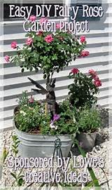 Easy Fairy Rose Garden Project | Fabulous Garden Flowers | Pinterest