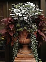 fall and winter container garden ideas
