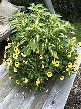 Gardens Ideas, Gardens Joy, Gardens Planters, Gardens Flower, Plants ...