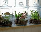 creative indoor gardening ideas design to beautify your space