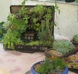 miniature garden won in oc fair 2013