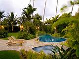 ideas for backyard tropical palm trees florida landscaping ideas