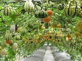 Vertical growing | Garden Ideas | Pinterest