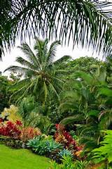 Tropical garden | Backyard Ideas | Pinterest