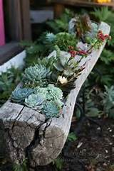 log planter shirly mcdonnell